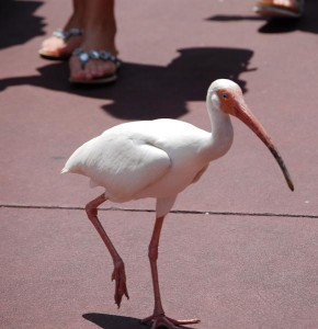 Bird at Magic Kingdom