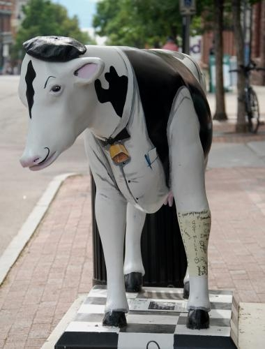 Cows on Parade in Burlington, VT