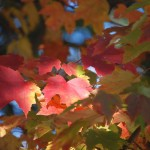 Photo Blog: Autumn in Vermont