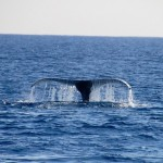 Whale Watching on Oahu
